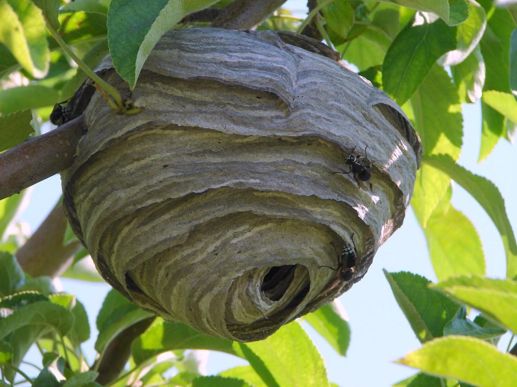 Bee ID - Sheboygan Cou...