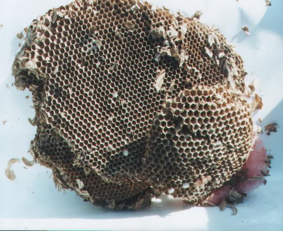 bee county dating Ibb2018 - international brain bee.